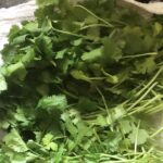 Keeping Cilantro Fresh